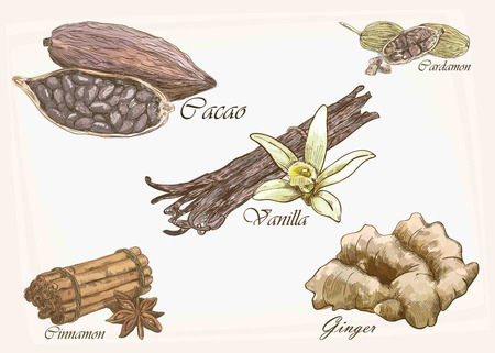 cocoa beans: five isolated vector dessert colorful spices