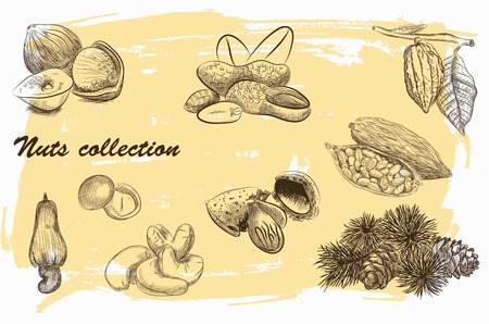 hand tree: collection of nuts sketch with vintage background