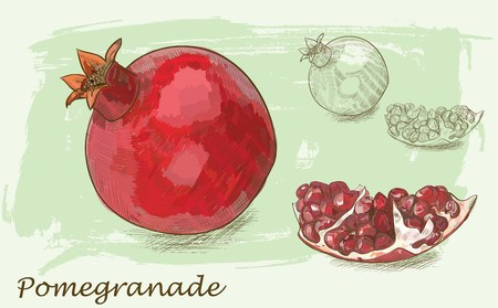 Vector pomegranate painting on background