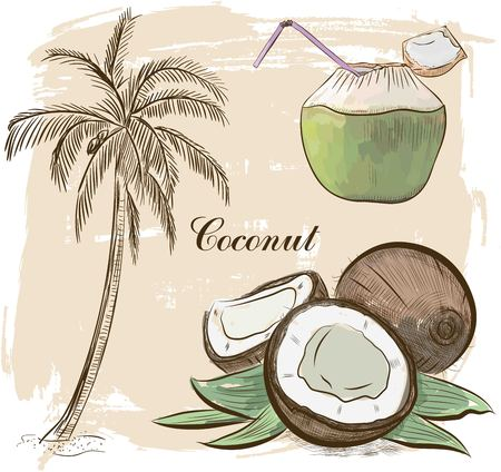 Vector Hand drawn coconut set. Cocktail isolated on vintage background.