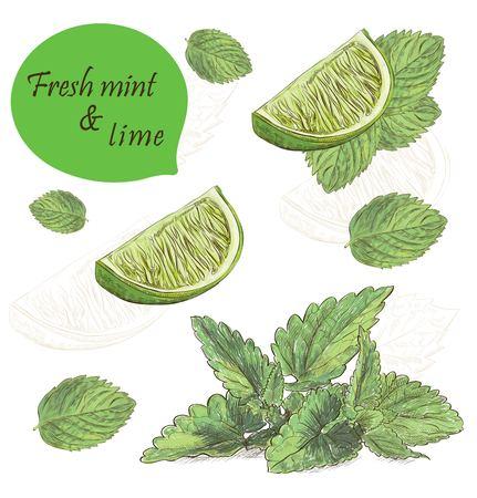 Fresh mint and lime set