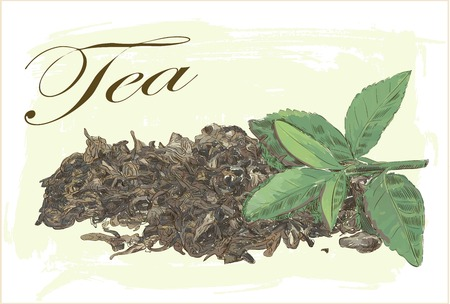 green and dry tea leaves on vintage background Illustration