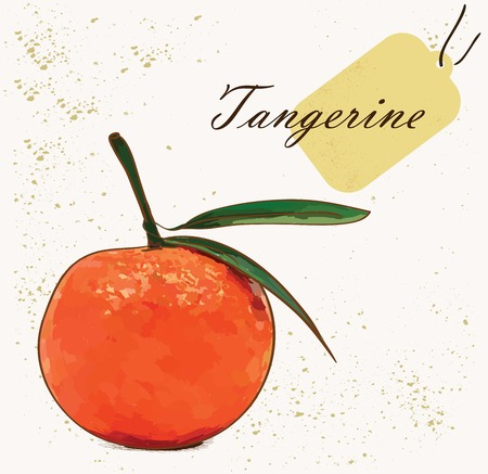tangerine: Vector illustration of fruit tangerine on background with tag in the corner