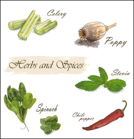 colorful herbs and spices set with celery, poppy, stevia, spinach and chili pepper