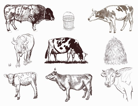 mammals: mammals - vector set of different tipe of cows