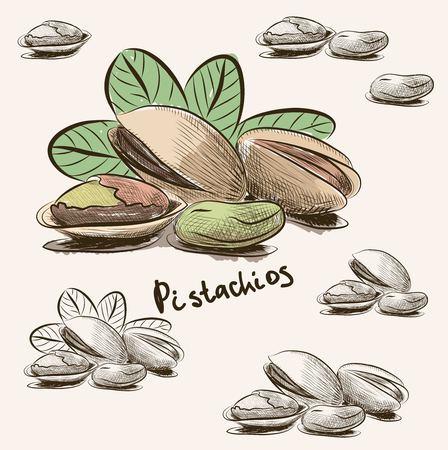 Pistachio nut isolated on white background.
