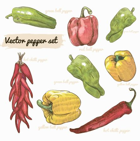 set of realistic vector sketch peppers Illustration