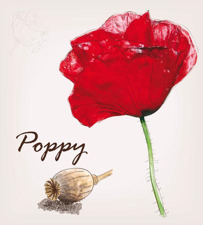 Poppy vector set