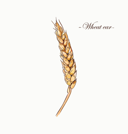 Sketch of colored wheat.