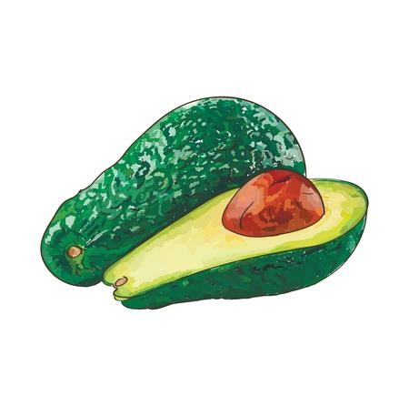Colorful Avocado vector sketch Иллюстрация