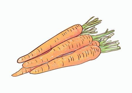 Heaps of carrot illustration on white background