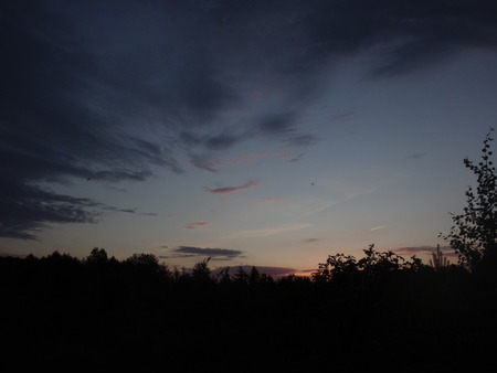pink sunset: Pink sunset above the dark trees in the late evening