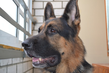 police dog: A police dog in a concrete cell