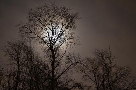 dark: Dark tree and moon Stock Photo