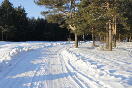 snow road: Snow road in the forest