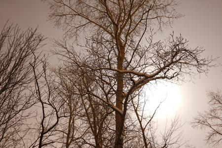 disturbing: Night, dark branches of trees and the moon