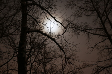 awful: Night, dark branches of trees and the moon