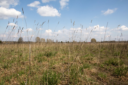 spaciousness: Field and grass in a beautiful autumn day Stock Photo