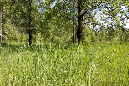spaciousness: Field and grass in beautiful summer day Stock Photo