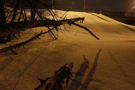 winter night: Winter night, big tree and snow around