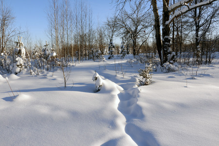 crosscountry: Path in the snow in a cold winter day Stock Photo