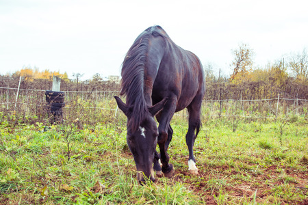 autumn horse: Big horse outdoors in an autumn day