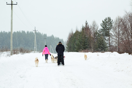 dog sled: Dog sled in a winter day and snowfall