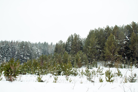 Trees in a winter day and snow Stock Photo