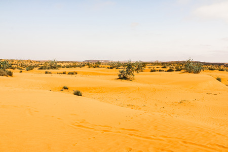 Sahara desert, sand and different plants in Morocco 版權商用圖片