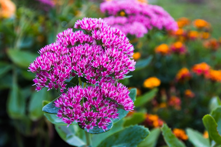 Beautiful nice flower in a good day Stock Photo