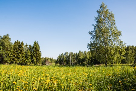 Field and forest far in the background Stock Photo