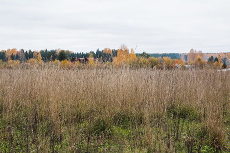 Field and trees on the background in an autumn day Stock Photo