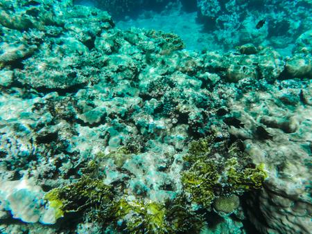紅海の水の下で灰色と緑のサンゴ