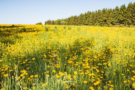 Field and forest far in the background in a summer day Stock Photo