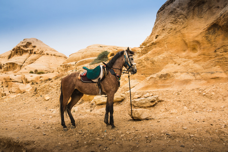 The horse tied to a stone in the Petra Jordan in a day