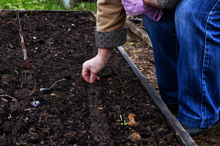 A woman's hand is planting something in a black land in the garden