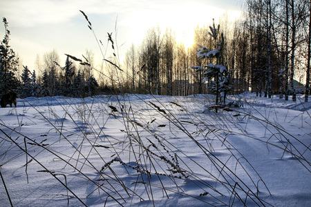 Winter landscape with field full of whit snow in a evening