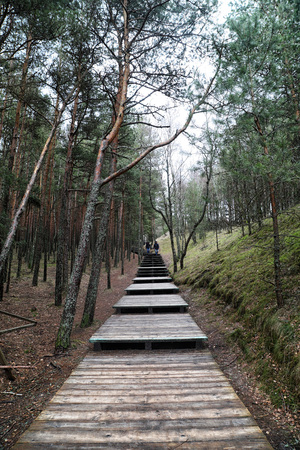 A walkway made of wood leading into a forest in a cloudy day