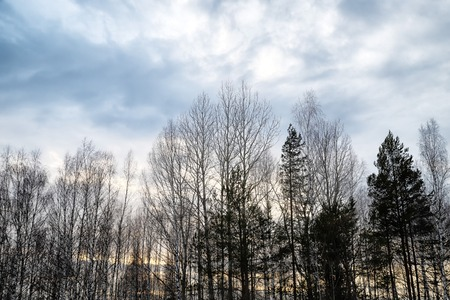 Trees without leaves against the cloudy sky in winter or early spring. Gloomy, sad landscape