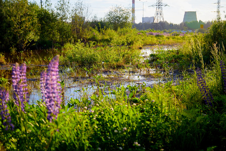 Nature with a swamp or a small lake, greenery all around and an industrial landscape with chimneys in the background