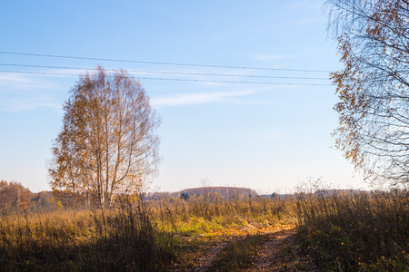Golden field with grass, birch tree in the background and harvest and deep blue sky in an autumn day Imagens