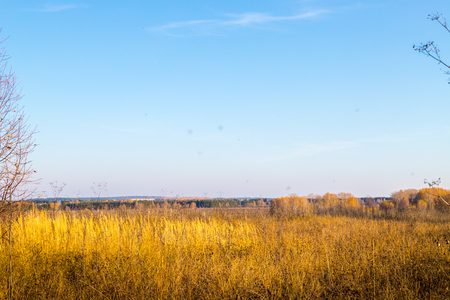 Golden field with grass and harvest and deep blue sky in an autumn day