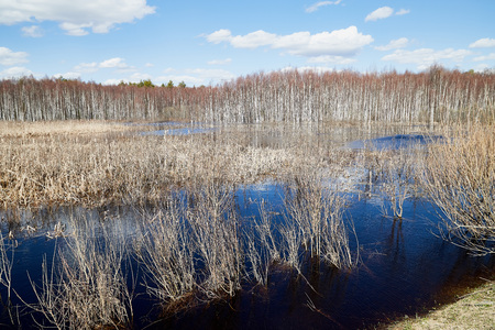 High water on a river or on a lake in sunny spring day. Russian nature landscape with water, trees and blue sky with white clouds 版權商用圖片 - 124716286