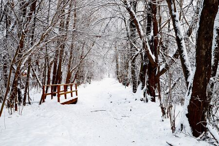 Snow covered trees in a winter forest and small path between them. White landscape in a cold day