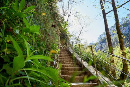 Path in the mountains among the green plants on a summer day. Beautiful mountains landcape