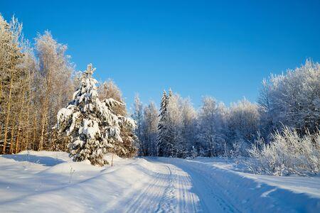Weiße Straße in einem Winterwald mit schneebedeckten Bäumen an einem sonnigen Tag. Weiße Landschaft an einem kalten Tag