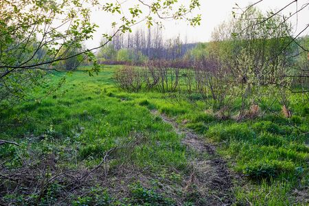 Nature landscape with green treeses and narrow path in summer, spring or autumn evening