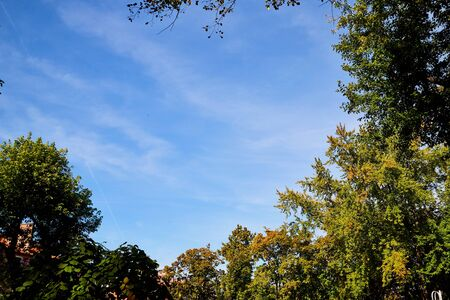 Beautiful sky with white clouds and top of trees in a sunny summer, spring or autumn day. Background