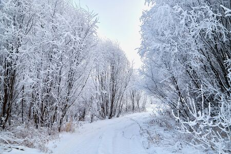 Snowy road among the trees covered with frost on a winter day