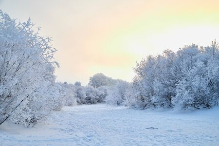Snowy road among the trees covered with frost on a winter day 版權商用圖片 - 133773053